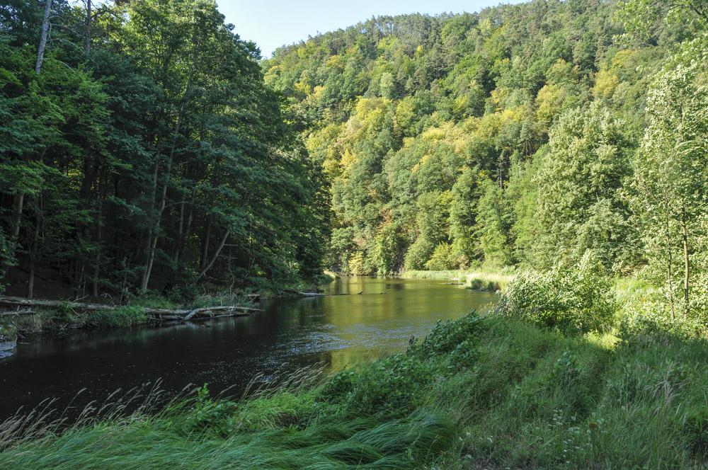 Alter Staubereich: sollen diese Ufer (samt Auen und ufernaher Naturwälder) in einem schlammigen Stausee versinken?